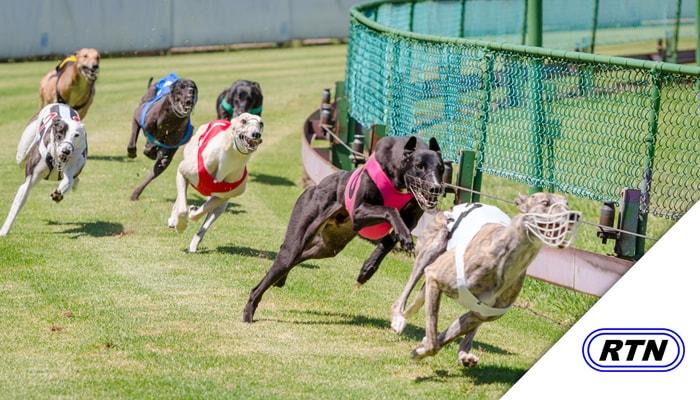 Greyhound Racing on TV