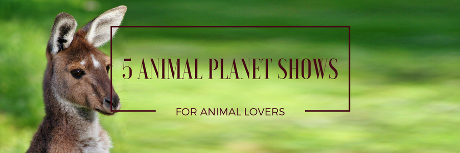 5 Animal Planet Shows For Animal Lovers