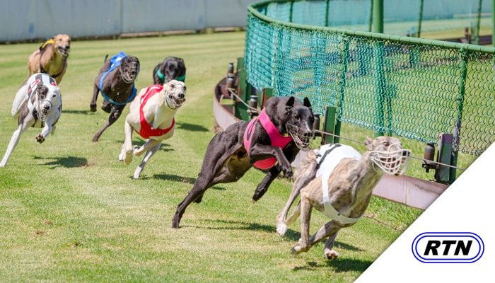 Greyhound Racing on TV