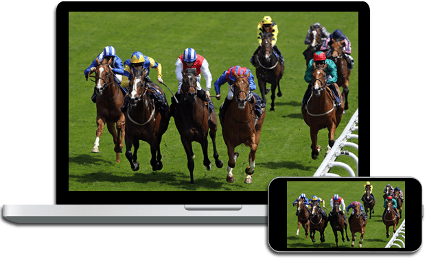 Live Horse Racing on DISH