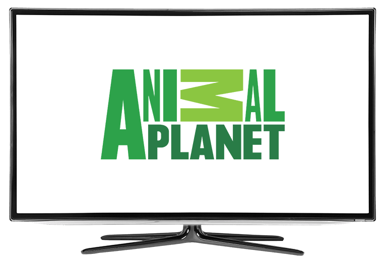 What Channel is Animal Planet on DISH?